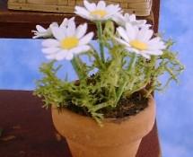 Miniature Daisies by Kathryn Depew