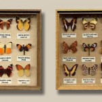 Miniature  Butterfly Collections by Silvia Bolchi