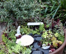 Living Miniature Container Garden by Lynn McEntire