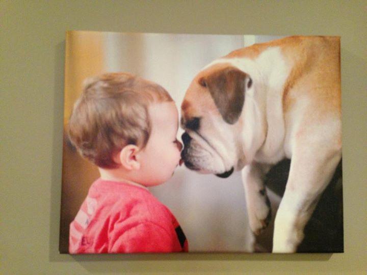 Easy Canvas Prints bulldogcanvas