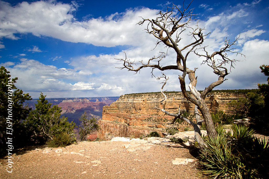 Grand Canyon with Tree Nature Photography by Erin Johnson